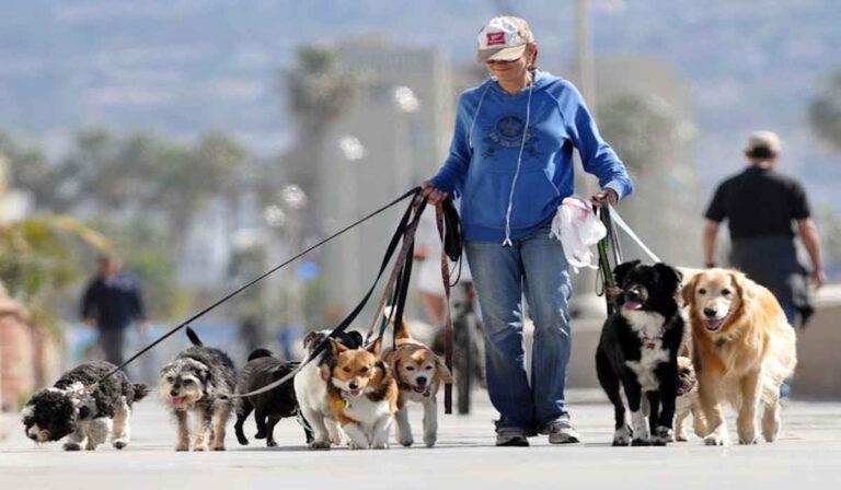 Cómo los estilistas, paseadores de perros y más están haciendo seis figuras, y qué puede aprender de ellas