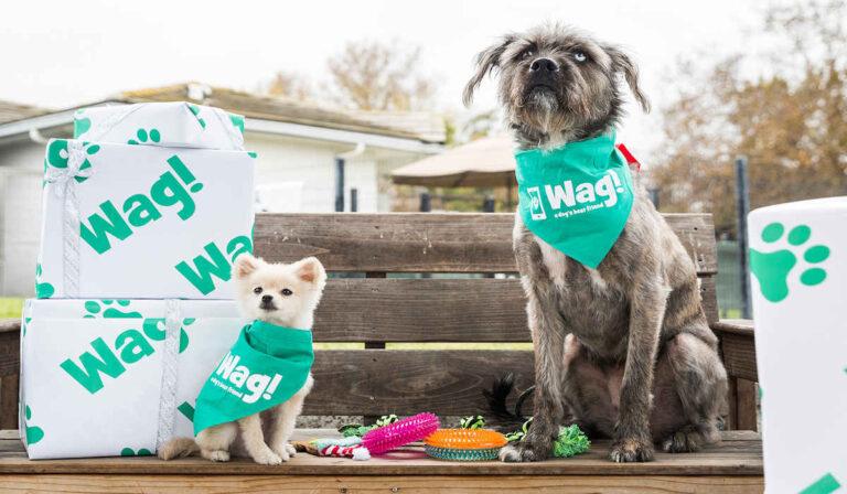 Todo sobre Wag!: cómo contratar o trabajar como paseador de perros