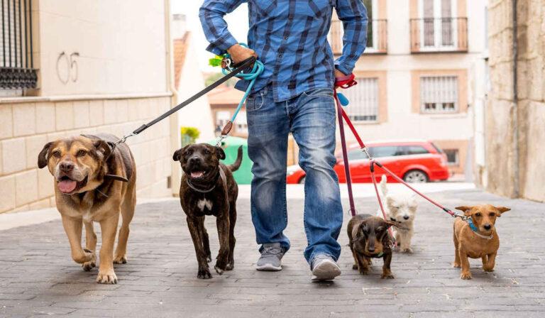 Cómo conseguir trabajos para pasear perros, y cuanto se puede ganar