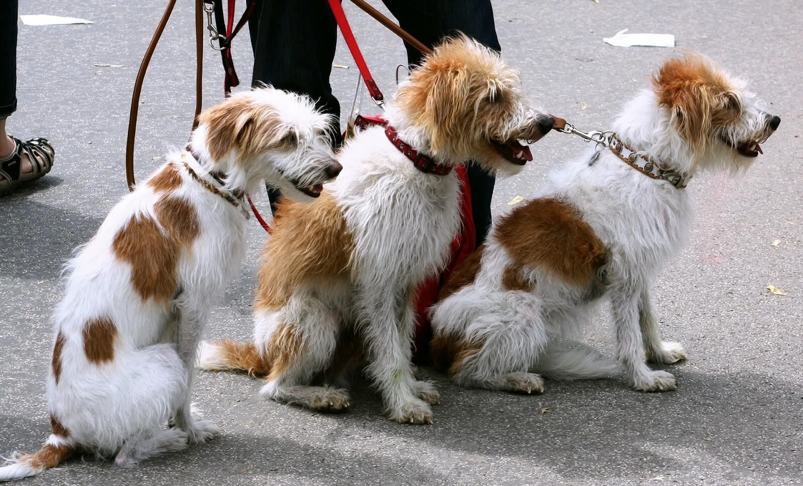 Evite las estafas comunes de Care.com y garantice un tratamiento adecuado para sus queridas mascotas