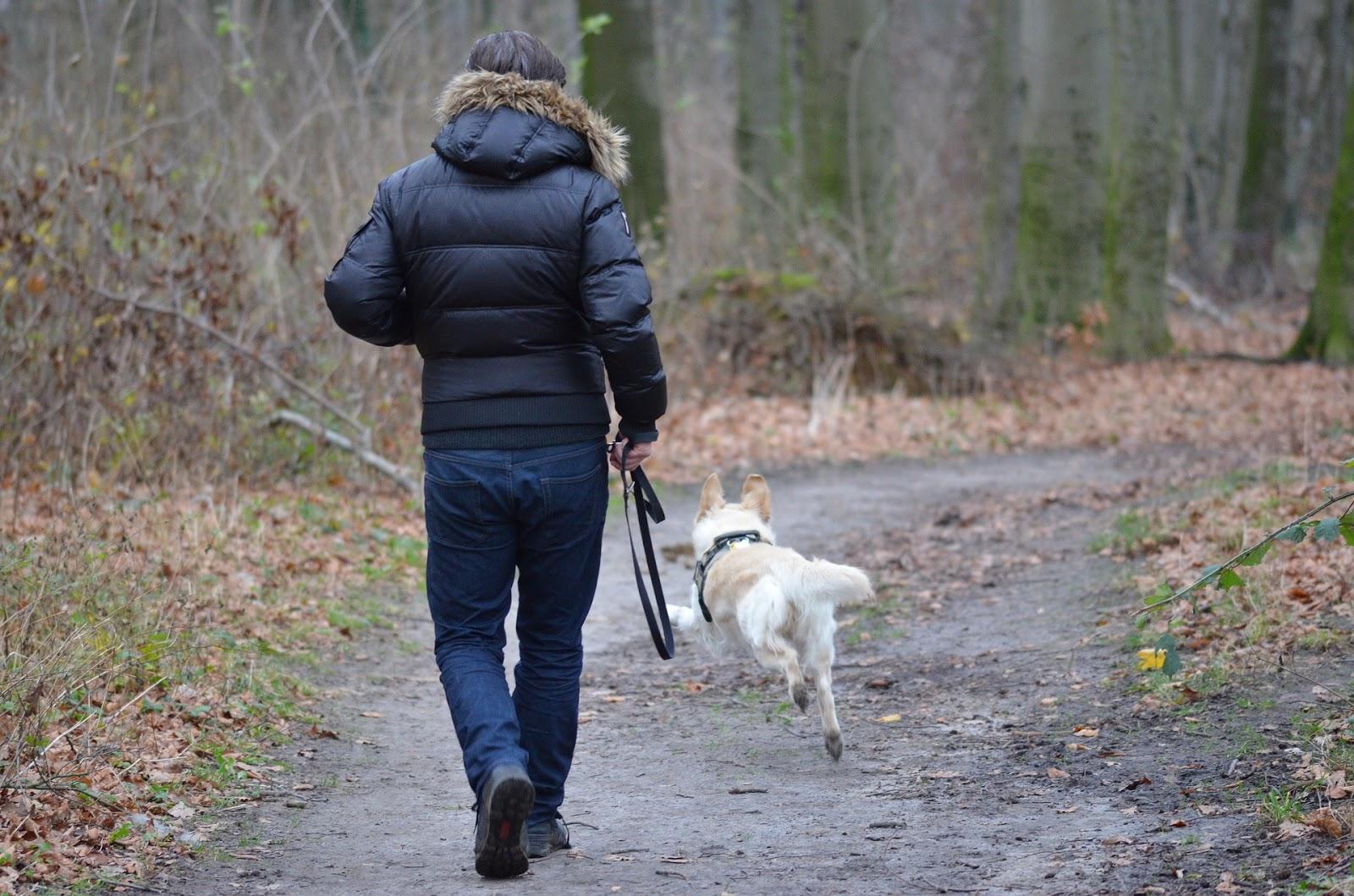 Hombre caminando perro blanco en el bosque