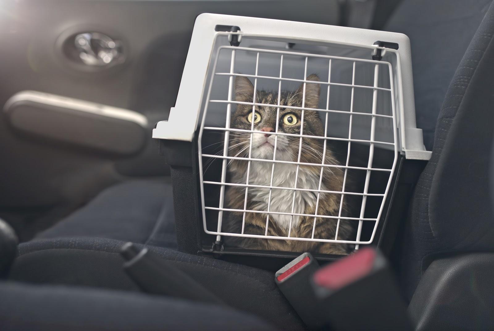 Un gato en una caja en el asiento del pasajero de un coche.