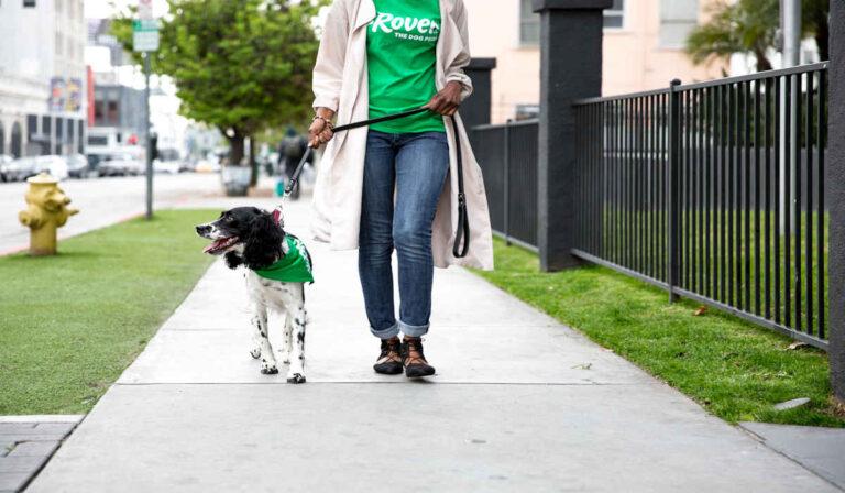 Cómo convertirse en un paseador de perros con la aplicación Rover