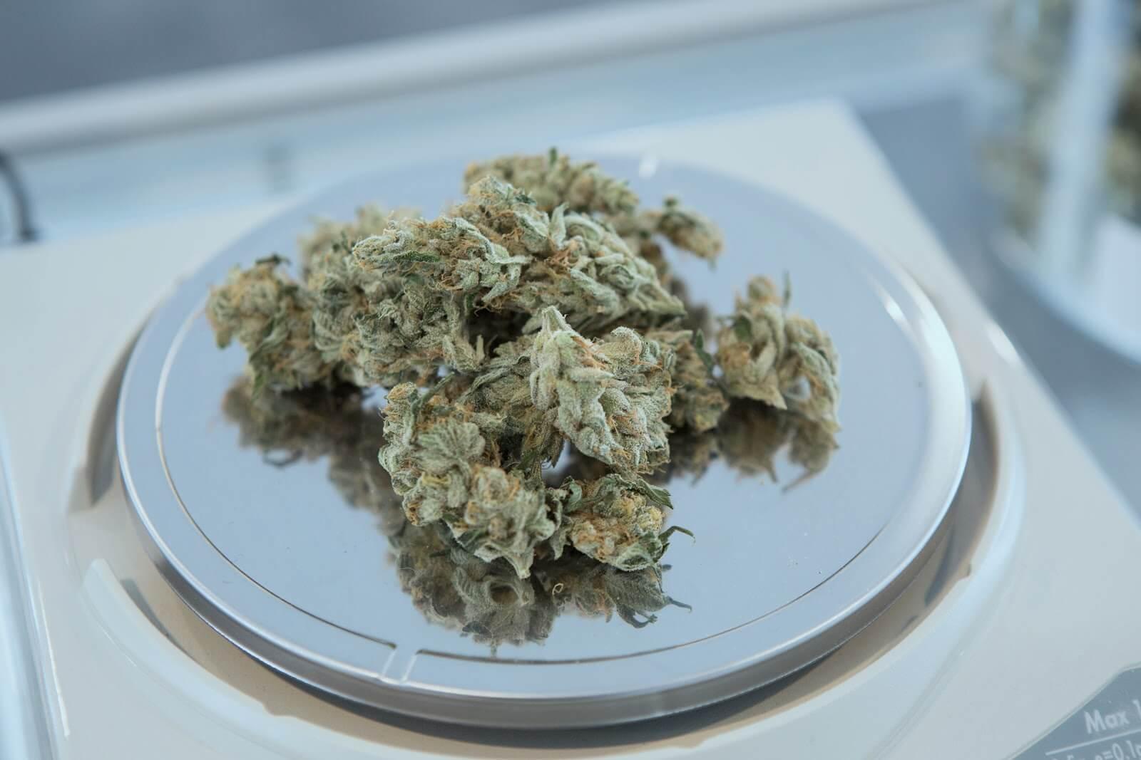 Entrega de marihuana: cogollo a escala