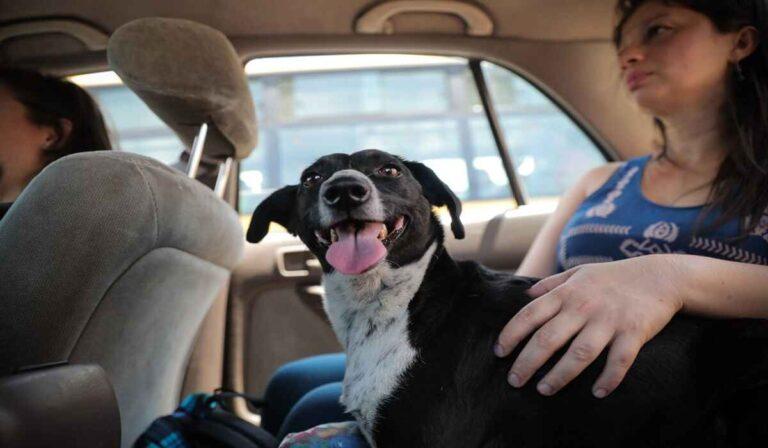 Uber & Perros: La política completa de Uber para mascotas